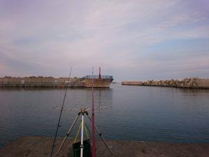 漁港で竿を出している様子