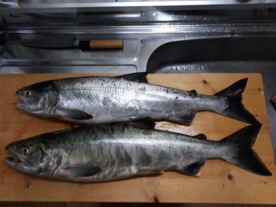 夕まずめに妻と釣った鮭