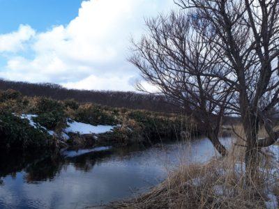 早春の川の様子