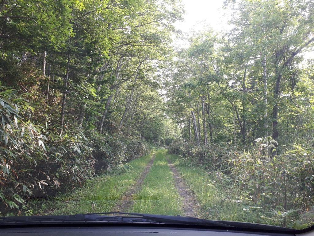 鬱蒼とした林道